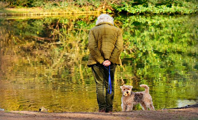 perros como mejor acompañante para el adulto mayor