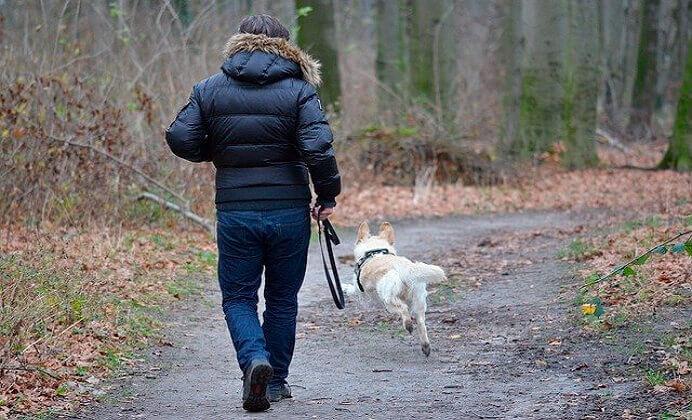 ¿Es bueno para el perro correr con nosotros?