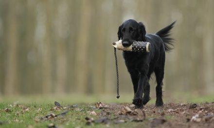 3 consejos para adiestrar a un perro de caza