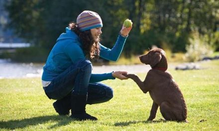 8 consejos básicos que debes conocer para adiestrar a tu cachorro