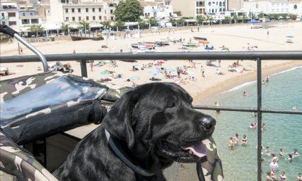 Recogida de Firmas para que Perro Enfermo se pueda bañar en la playa