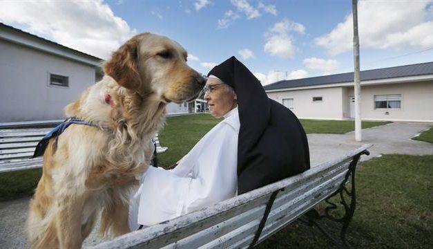 Adiestran en la Carcel a perros para discapacitados (gracias a una monja)
