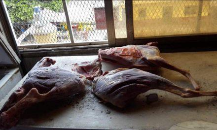 Cierran restaurante Chino por vender carne de Perro