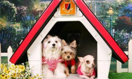 Elige la mejor caseta para tu perro. Trucos y consejos.