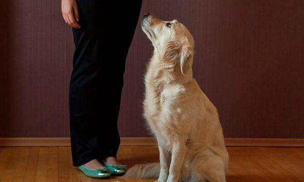 Cómo enseñar a su perro a sentarse (SIT) – Guía paso a paso