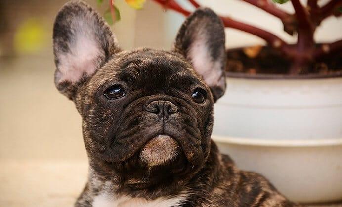 15 cosas que seguro no sabías de los perros