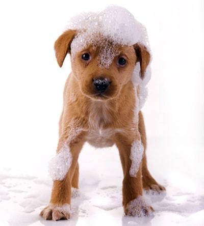 Cuidados imprescindibles para tu nuevo cachorro