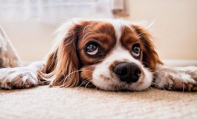 Hablemos del perro diabético y su cuidado