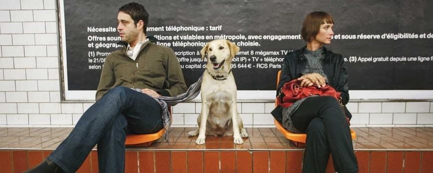 Custodia Compartida de un perro en caso de divorcio