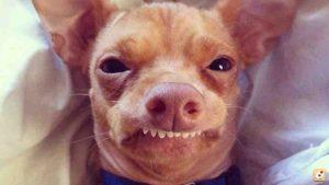 sindrome de down en animales y perros