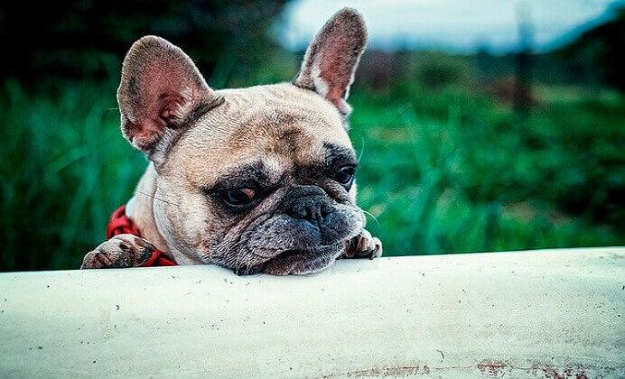 Necesidades fisiológicas del perro