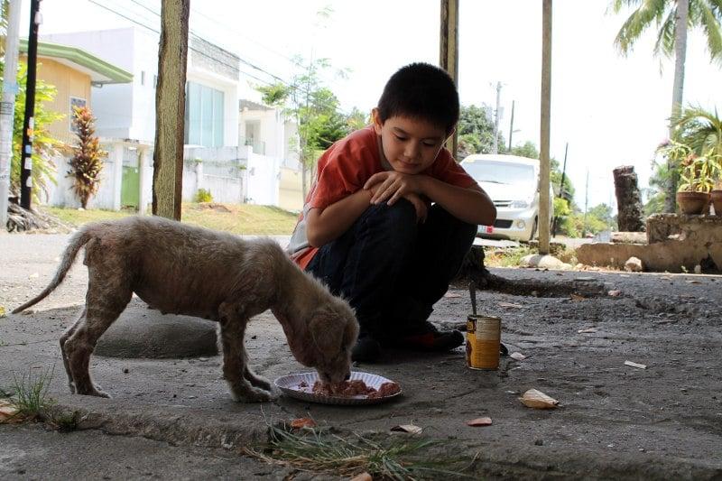 [INCREIBLE] Historia del Niño criado por perros callejeros