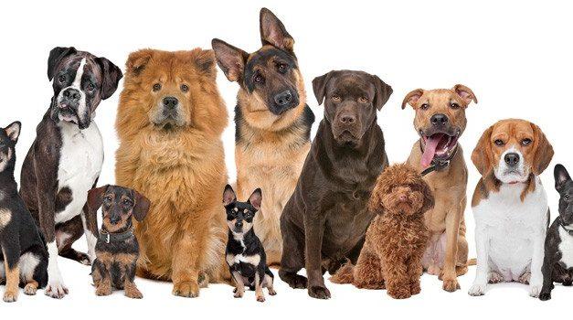 ¿Cómo Elegir el mejor nombre para tu perro?