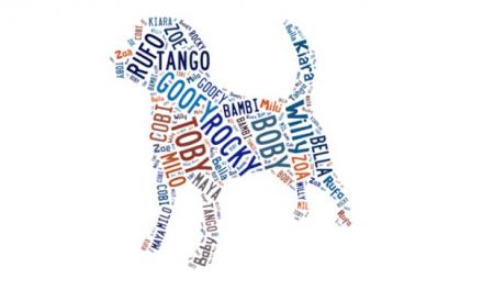 ¿Ya sabes el nombre de tu nuevo perro?. Te ayudamos a escoger…