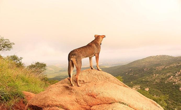 ¿Cómo sucedió la domesticación del perro?