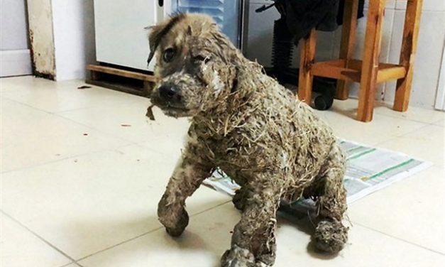 [VIDEO] Increíble recuperación del perro Pascal (después de sufrir maltratos)
