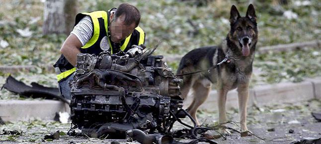 Perro abandonado salva la vida a mujer herida en un accidente de tráfico