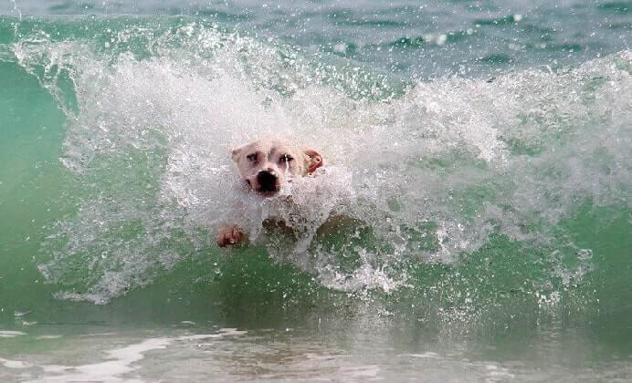 ¿Es peligroso que el perro beba agua del mar?