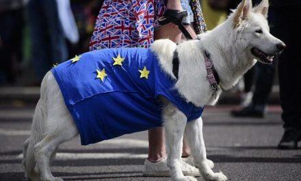 ¿Razas de perros no británicos afectados por el Brexit?