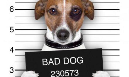 ¿Perro en la cárcel cumple condena? [Conoce esta sorprendente historia]