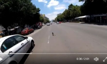 [VIDEO] Ciclista rescata a perro de ser atropellado