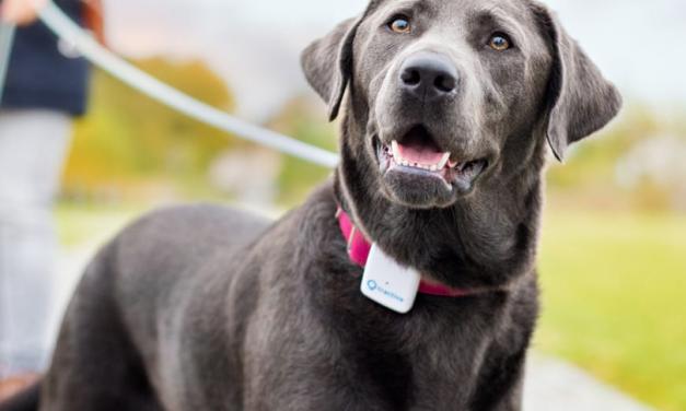 Evita que tu perro se pierda. Guía del Tractive GPS 2018.