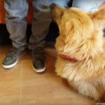 Perros entrenados detectan ataques de epilepsia