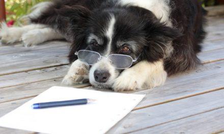 Tu perro entiende hasta 160 palabras (y sabe sumar)