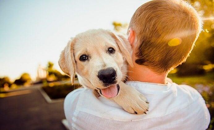 La razón por la que tu perro se alegra al verte