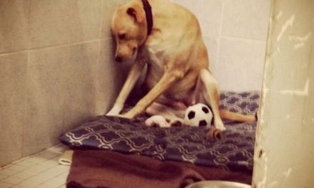 El Perro más Triste del mundo va a ser sacrificado