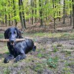 ¿Qué es un perro perdiguero? Razas más importantes