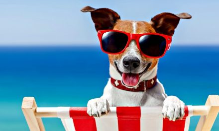 ¿Perros en la playa? [Encuesta]