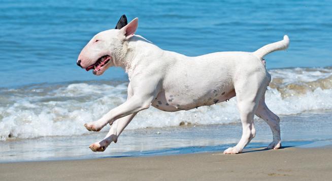 Tu perro necesita protector solar ¿Lo sabías?