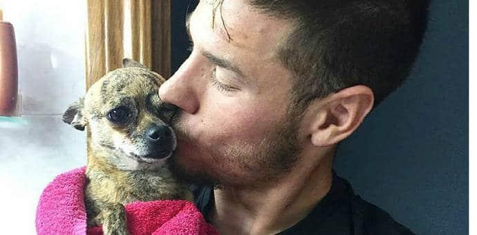 Recupera a su perro sano y salvo [se la habían robado]
