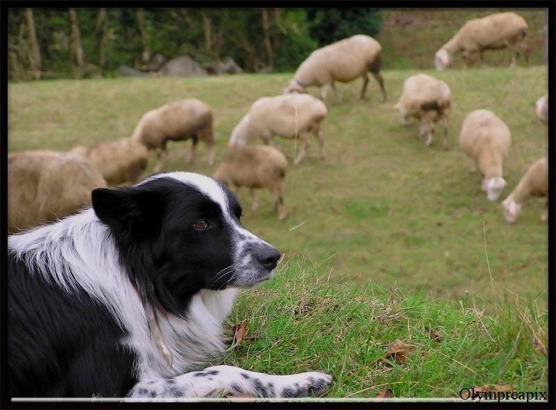 ¡Feliz 1 de Mayo! (a los perros trabajadores)