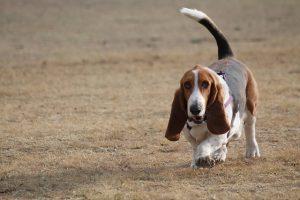 perro con miedo a la caza