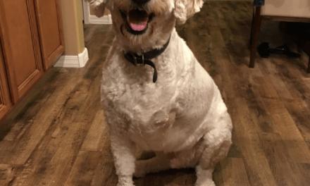 Amputan la pata a un perro y supera un cáncer de huesos