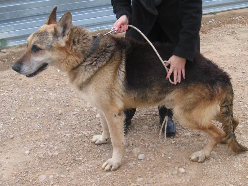 Marley, el perro que se jubila