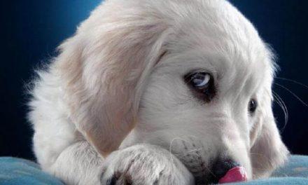 Lo que tu perro te quiere decir con su lenguaje corporal (y tu no entiendes…)