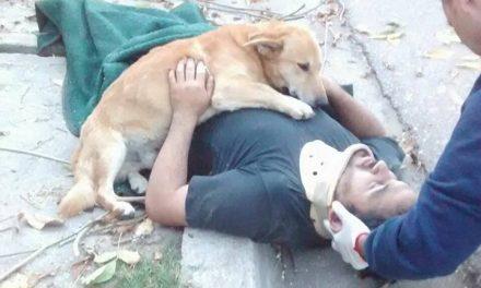 [VIDEO] Tony, el perro que abrazó a su dueño después de sufrir un accidente