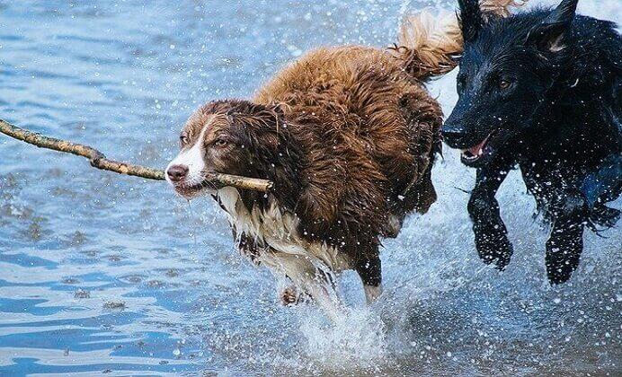 7 actividades que podemos realizar con nuestro perro
