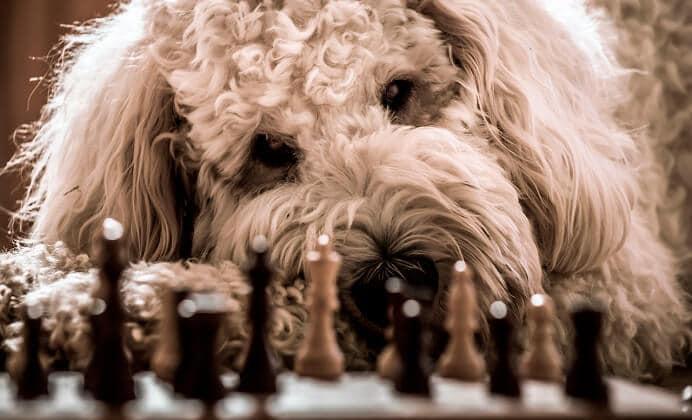 Ranking de los 10 Perros menos inteligentes