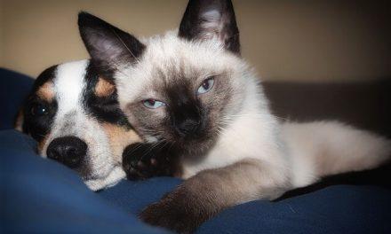 Perros y Gatos. 11 Consejos para conseguir la convivencia