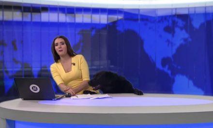 [Divertidísimo VIDEO] Presentadora de TV sorprendida en directo por un perro.