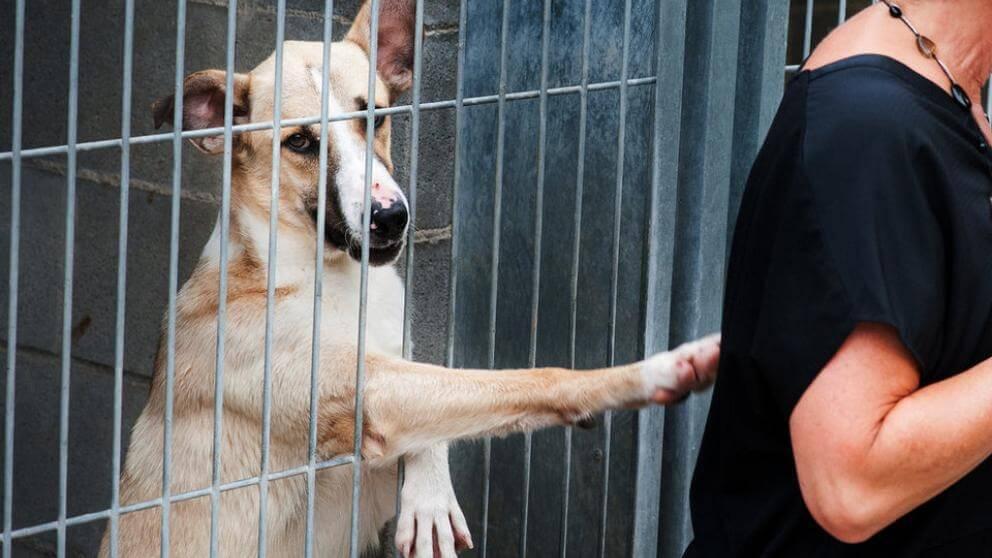 Matan a varios perros al lanzarlos por encima de la valla en una protectora de Sevilla