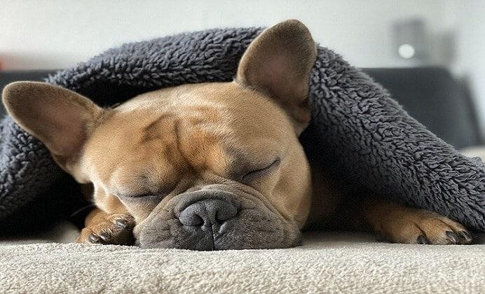 ¿Qué hacer ante problemas respiratorios caninos?