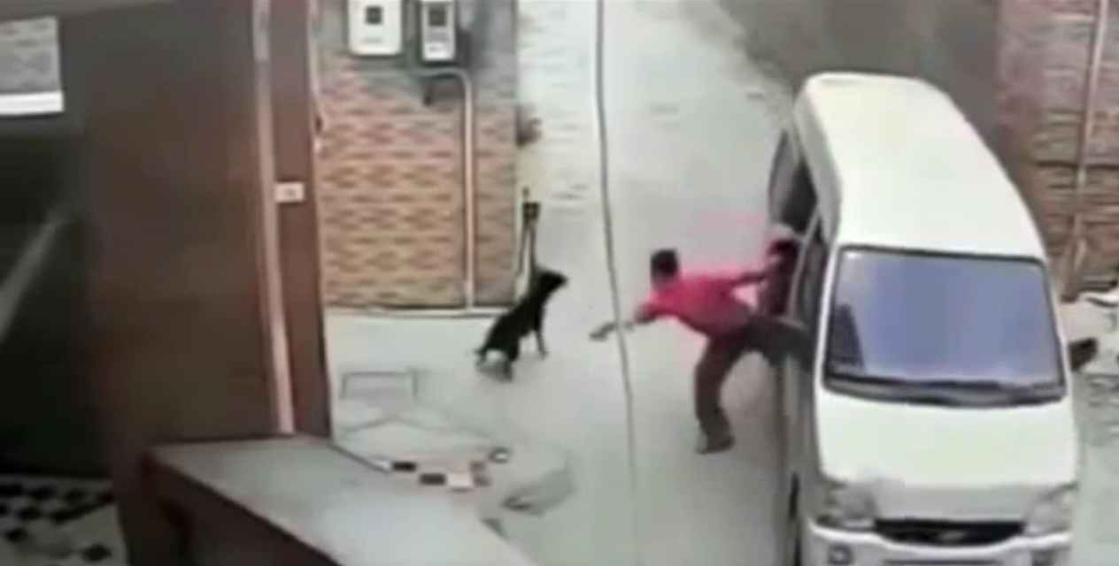 [VIDEO] Roban perros en China para Comérselos  (y es un gran negocio)