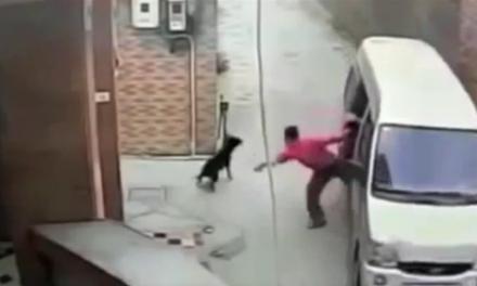 [VIDEO] Roban perros en China para Comérselos  (y es un gran negocio)