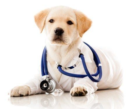 Salud y Alimentación para mi Cachorro.