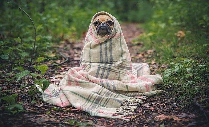 Síndrome del perro pequeño. Conoce sus causas